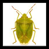 GA Cotton Insect Advisor