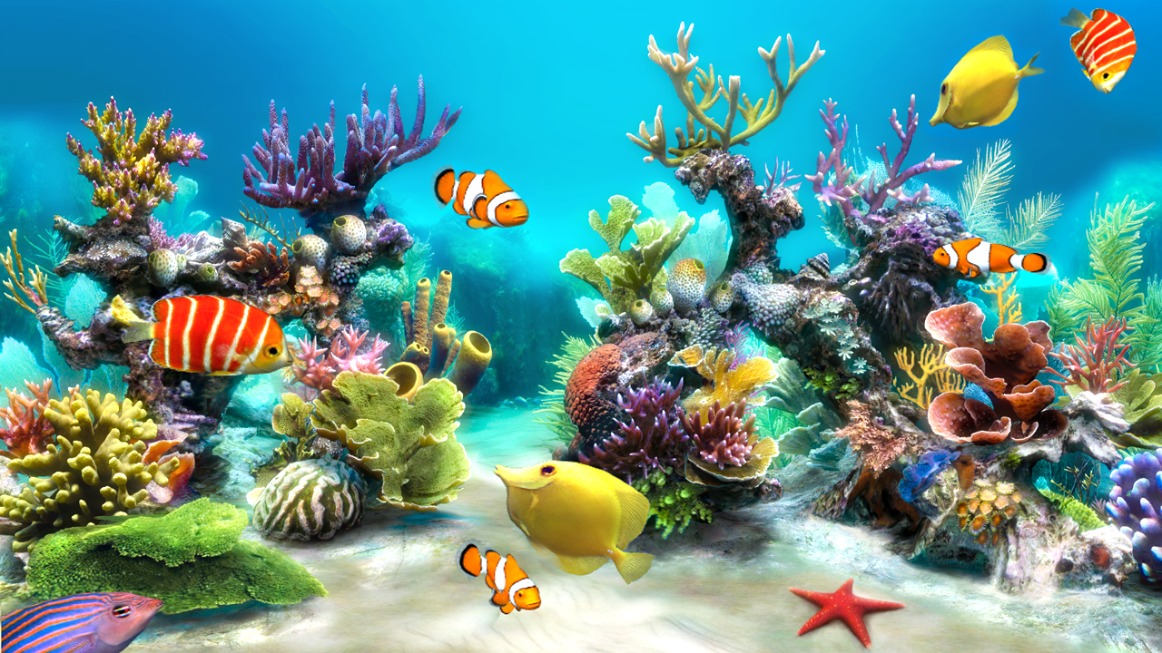 aquarium fish live wallpaper