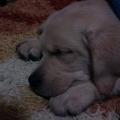 Puppy'