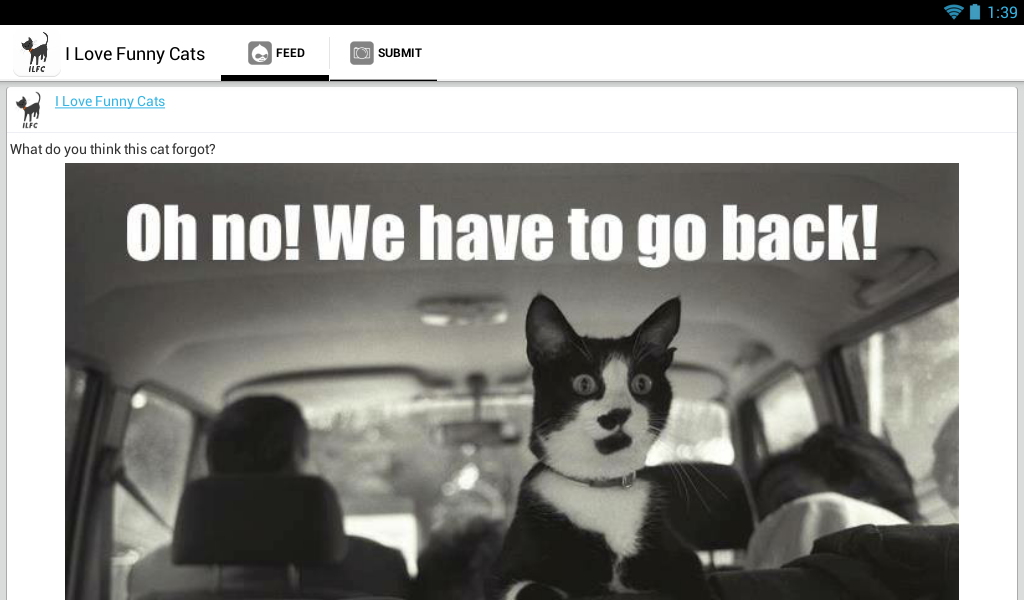 Questions Funny Cat i Love Funny Cats Screenshot