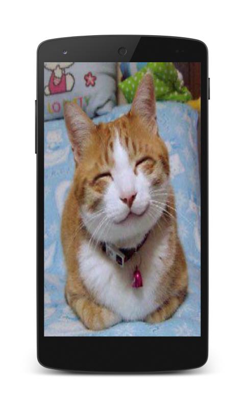 cat sound ringtone download for mobile