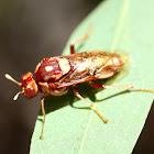 Steelblue sawfly