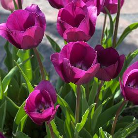 by Valerie Aebischer - Flowers Flower Gardens (  )