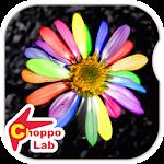 Wildflowers -Simple Pic Book-