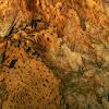 Cave fruit bats