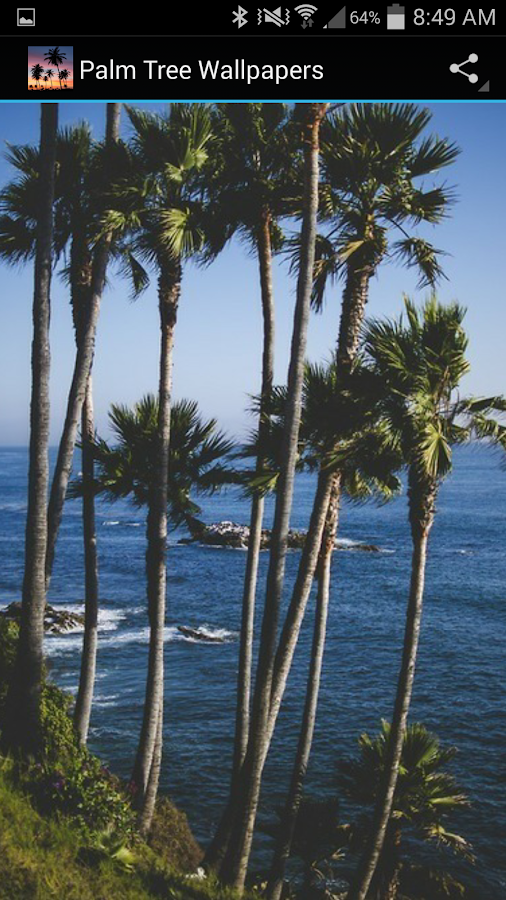 Palm tree wallpapers android apps on google play - Palm tree wallpaper for android ...
