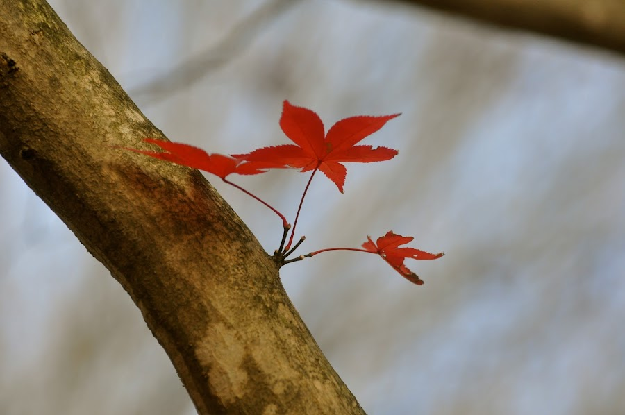 ONE LEFT US by Abba Rizal - Nature Up Close Leaves & Grasses