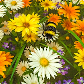 Bee Live Wallpaper HD