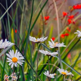 colors of flower  by Stefan Pettersson - Flowers Flowers in the Wild ( nature, color, colors, flowers, flower )