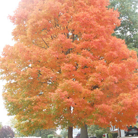 FALL COLORS by Laurie Jilek - Nature Up Close Trees & Bushes