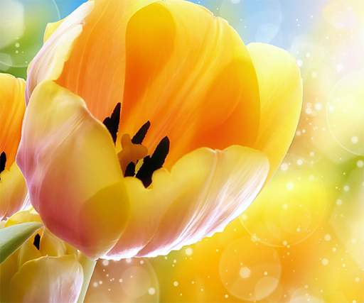 Tulip Live Wallpaper