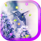 Hello Colibri live wallpaper