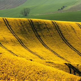 by Irena Brozova - Landscapes Prairies, Meadows & Fields ( south moravia )