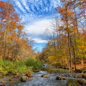 Autumn Day by Michael Buffington - Landscapes Forests ( water, stream, autumn, creek, forest, rocks, arkansas,  )