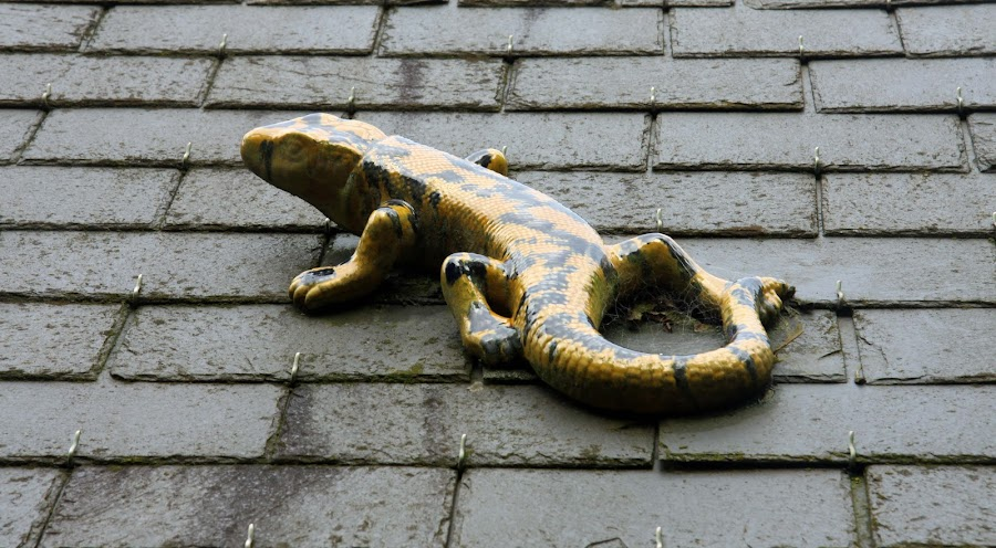 Lizard on the roof by Michael Moore - Artistic Objects Other Objects (  )