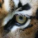 Animal Eyes 2 FREE icon