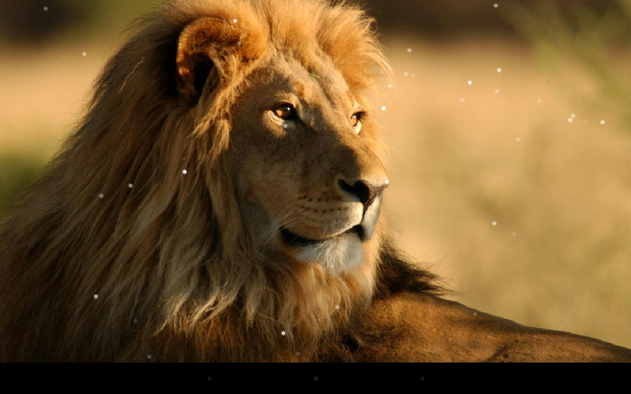 Lion Live Wallpaper- screenshot