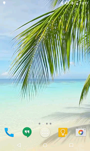 Palm on Beach Live Wallpaper