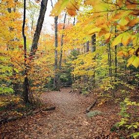 Autumn Trail by Ken Miller - Landscapes Forests ( fall colors, autumn, forest, white mountains, landscape, new hampshire, fall, color, colorful, nature,  )