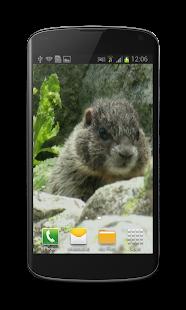 Cute Marmot Free 3D Wallpaper - screenshot thumbnail