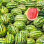 Water Melons by Nayyer Reza - Food & Drink Fruits & Vegetables ( fruit, nayyer, water melon, nayyer reza, reza )