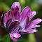 aIMG_9308_cr.jpg
