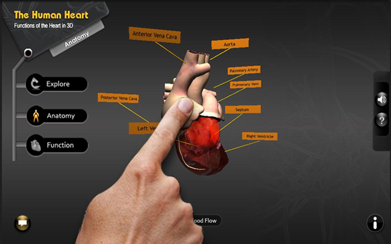 Explore heart in 3D - screenshot