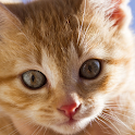 Pretty Cat Wallpaper icon
