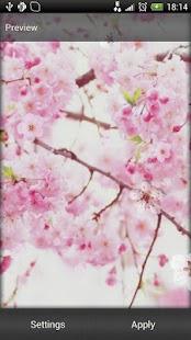 Sakura Live Wallpaper 3.1,بوابة 2013 2fw6nqJVlVa014uT0uRs