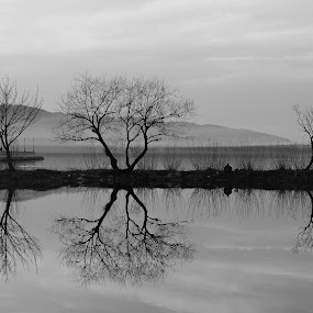 Mirror effect by Irena Čučković - Black & White Landscapes ( water, reflection, danube, river )