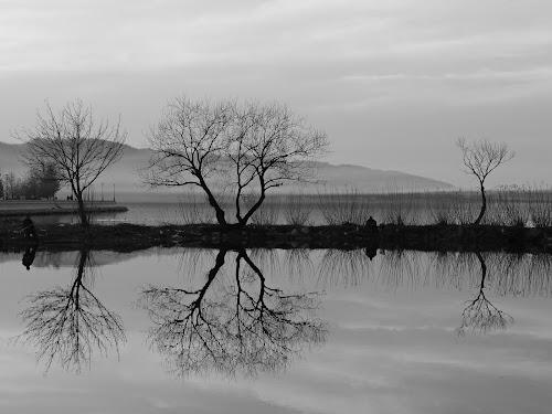 Mirror effect by Irena Čučković - Black & White Landscapes ( water, reflection, danube, river )