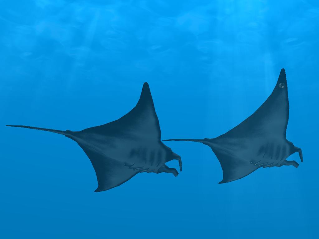 Ocean Dreams Model Sets