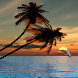 Dolphins Island Live Wallpaper