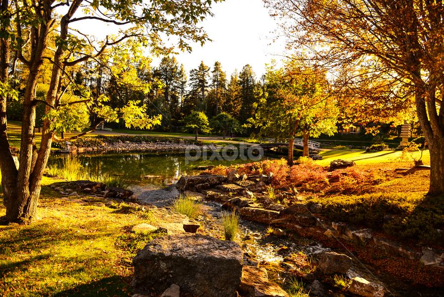 Devonian City Park by Joseph Law - City,  Street & Park  City Parks ( bushes, sun shine upon, trees, streams., botanical garden, city park, rocks, pond, shadows, devonian )