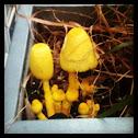Yellow Flowerpot Parasol