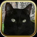 Black Cats Puzzle Games