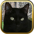 Black Cats Puzzle Games icon