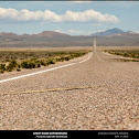 Great Basin Gophersnake