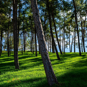 green forest by Alex Kapmar - Landscapes Forests (  )