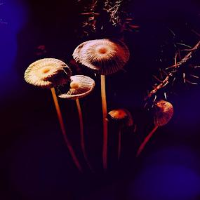 by Denise Zimmerman - Nature Up Close Mushrooms & Fungi ( macro, mushrooms, garden, nature, naturelovers, igaa, ig_worldshots,  )
