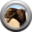 Hump Day Camel icon