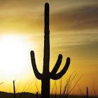 Tucson & the Old Southwest icon