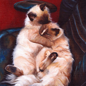 Ragdolls by Veronica Blazewicz - Painting All Painting ( cats, animals, cat, art, pets, ragdolls, feline, painting, artwork, oil )