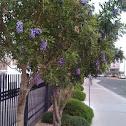 Purple flowered tree