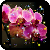 Orchid  HD live wallpaper