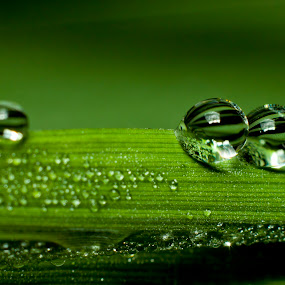 by Septyan Lestariningrum - Nature Up Close Natural Waterdrops (  )