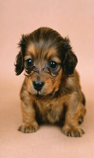 귀여운 강아지 사진