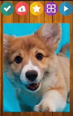 Dog Puppy Puzzle - screenshot