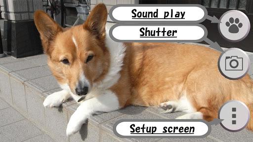 動物的聲音相機