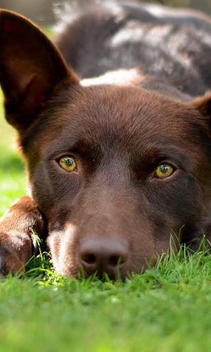 狗的最好的画像